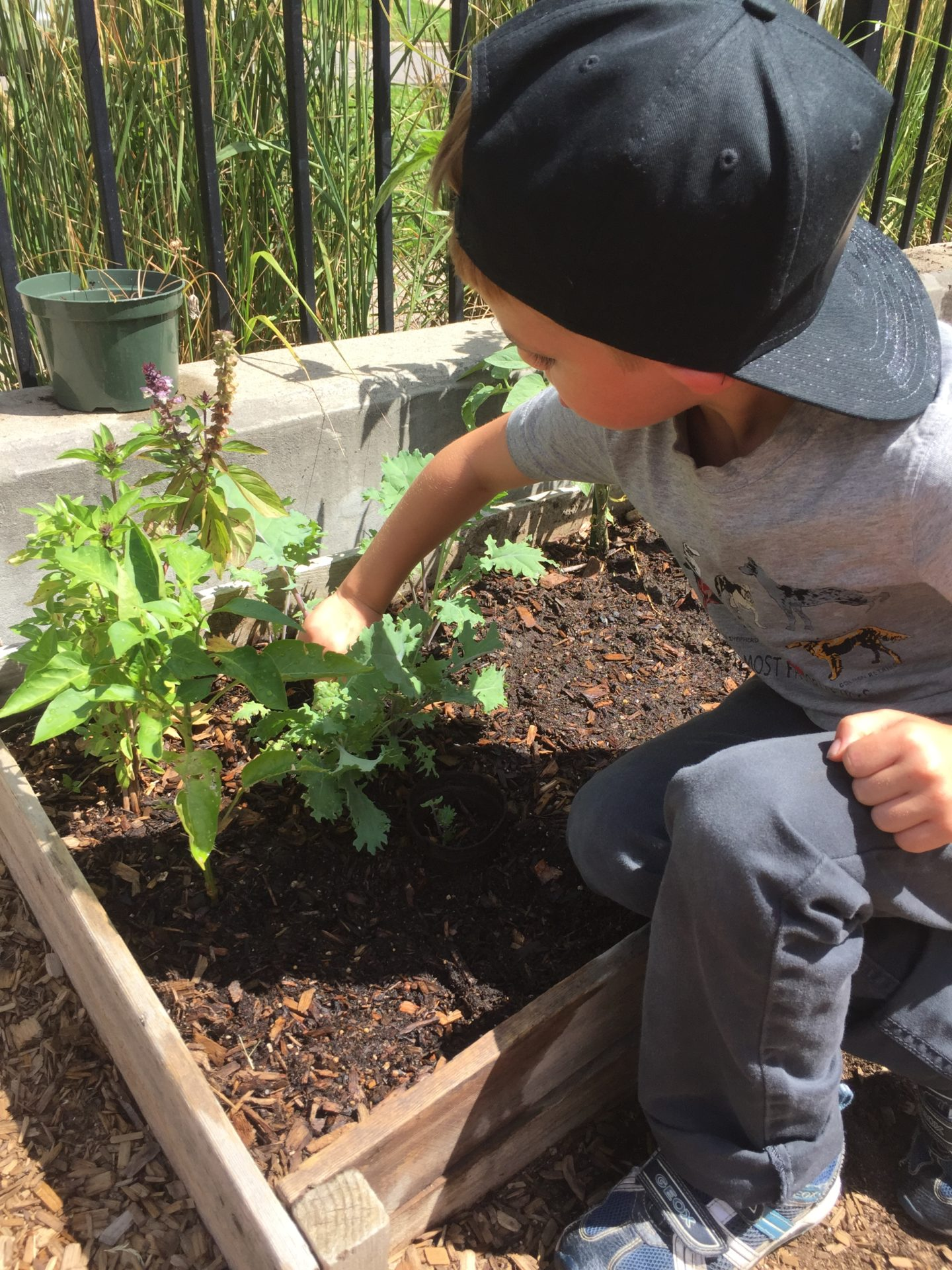 Child looking at plant in garden