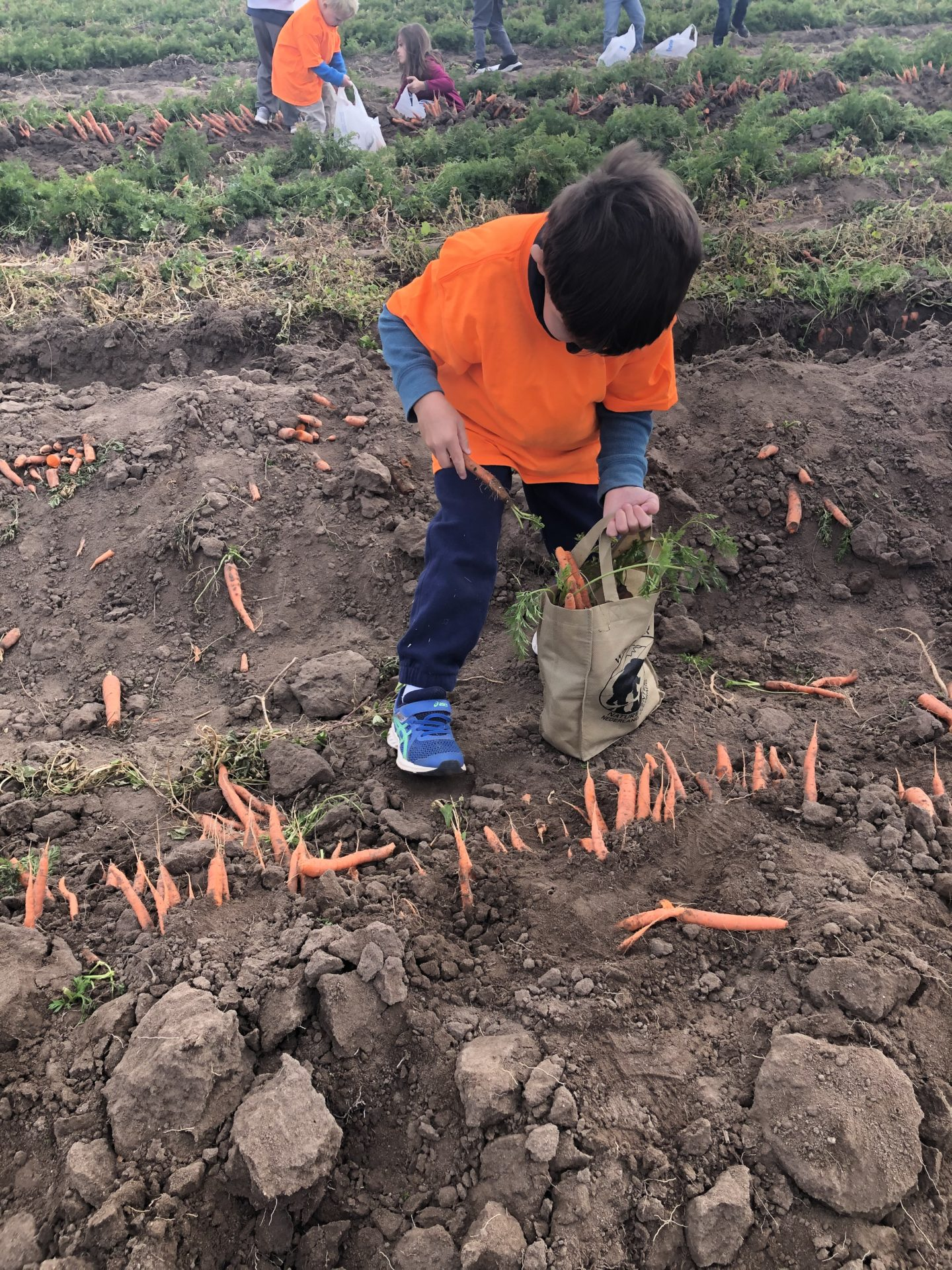 Child helps plant vegetables on a field trip