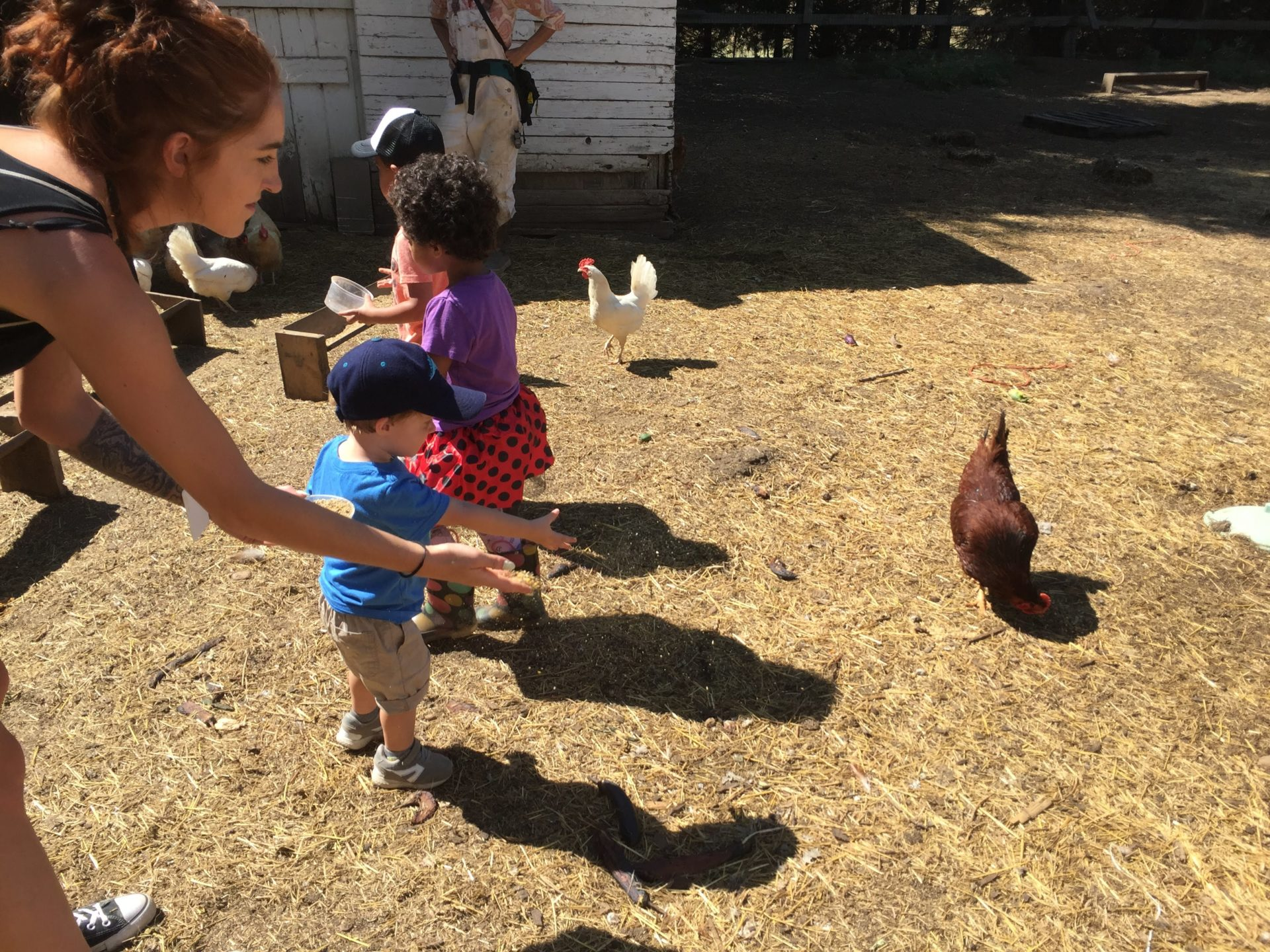 Children and teachers feed chickens on a field trip