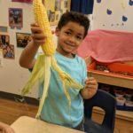 Preschooler holding up ear of corn